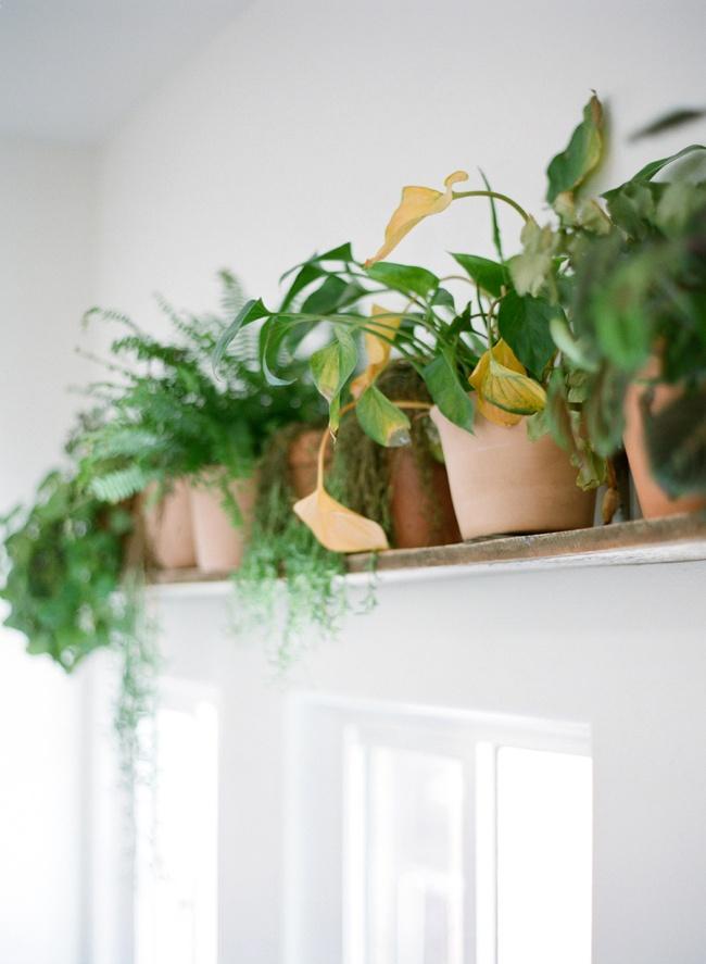 houseplantdesign