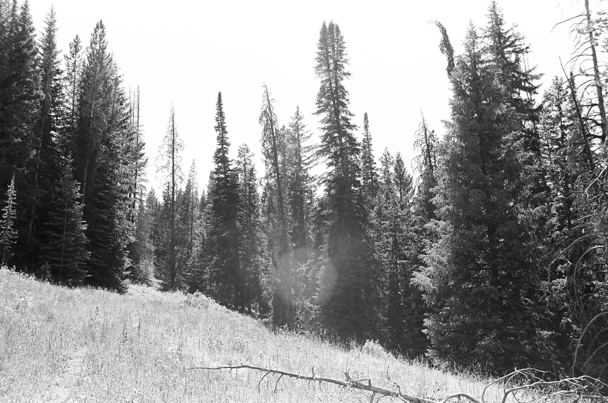 blackandwhitefilmlandscapes