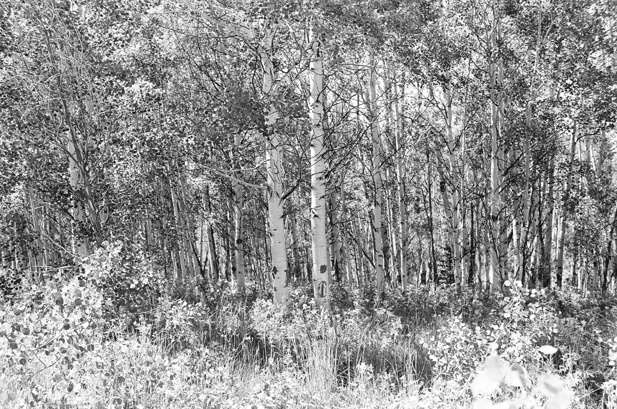 blackandwhitelandscape