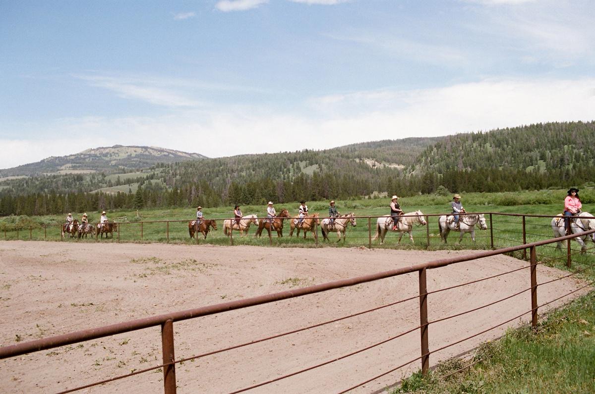 wyominghorses