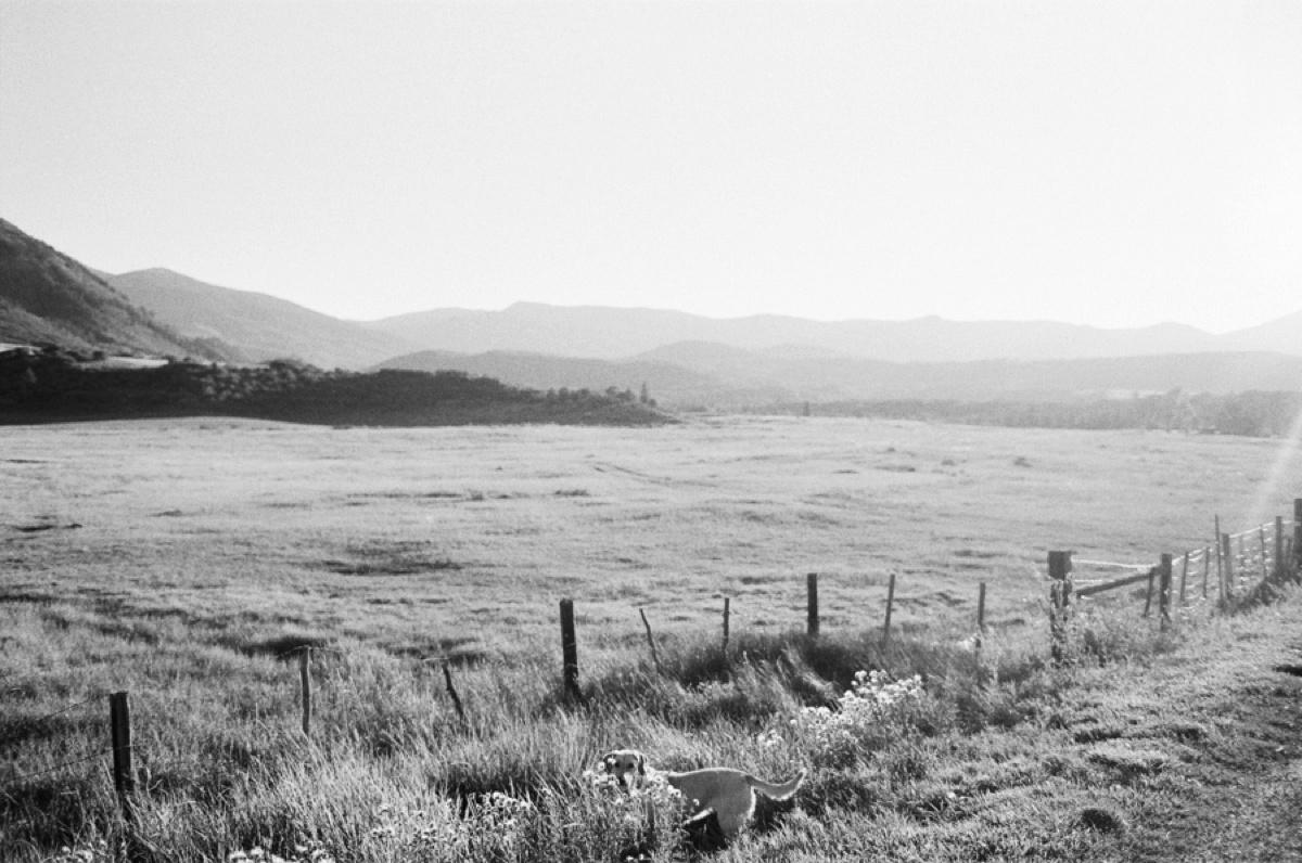 aspen-landscape-film